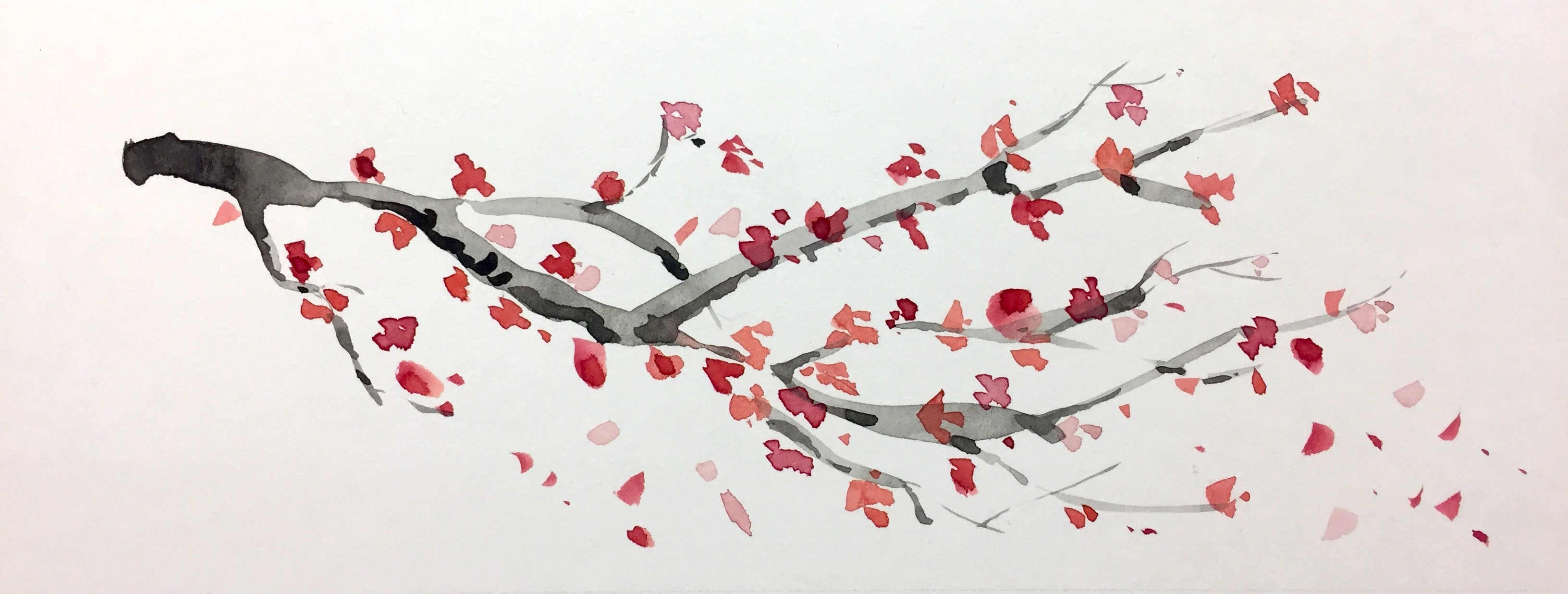 Rama de cerezo en flor