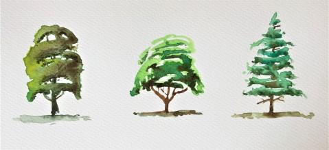 Tres arboles.JPG